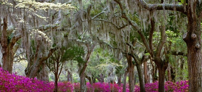 Springtime_in_Savannah_Georgia_Wallpaper_1r1w-680x310