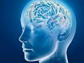 cerebro11-e1369971469238