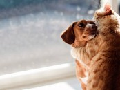 692x360xCats-Dogs.jpg.pagespeed.ic.hOdN2NBJog