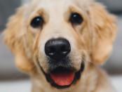 dog free