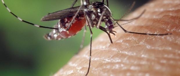 mosquito-1332382_960_720-1