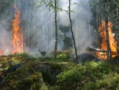 forest-fire-free