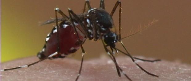 Orkin LLC Asian Tiger Mosquito