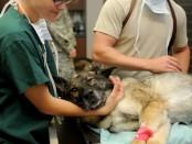 veterinary-85925_960_720