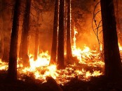 wildfire-1105209__340