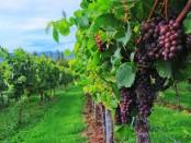 wine-2799719__340