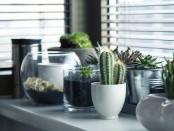 pots-716579__340