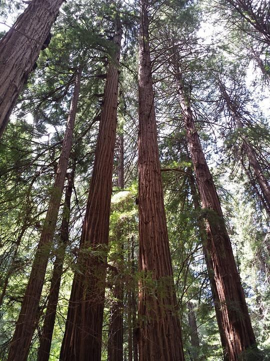 muir woods free 2