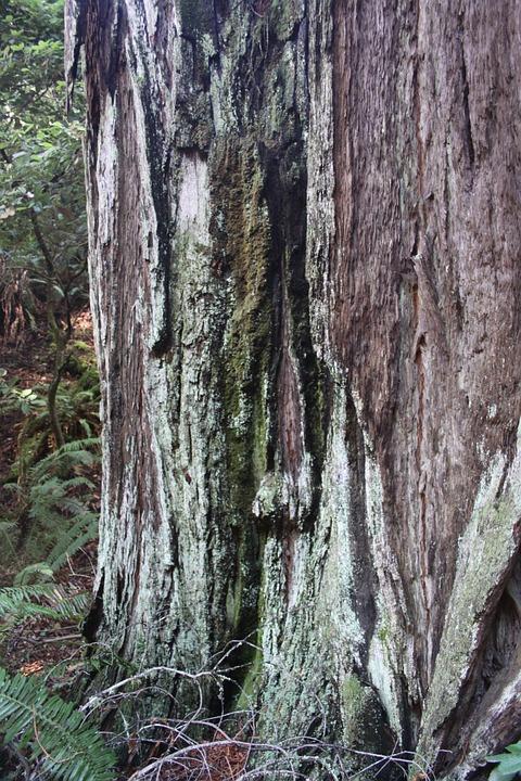 muir woods free 3